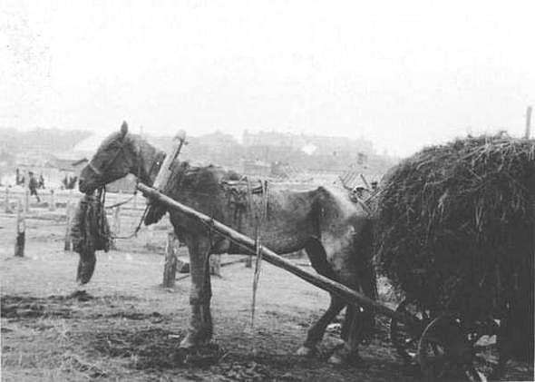 Famine Russia Ukraine North Caucasus genocide 5